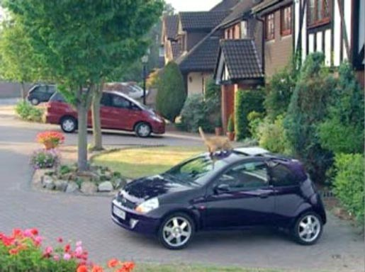 Ford Sportka Cat TV Ad