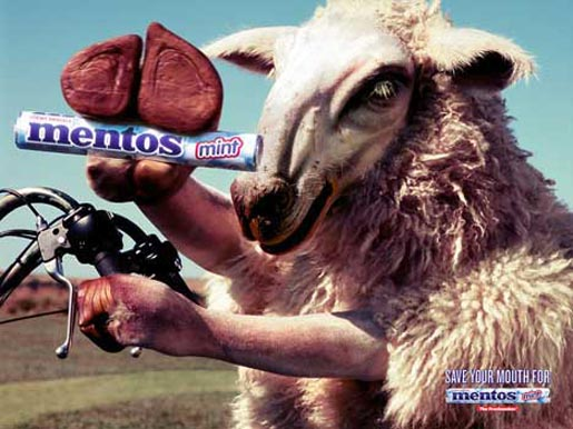 Triumphant sheep with Mentos