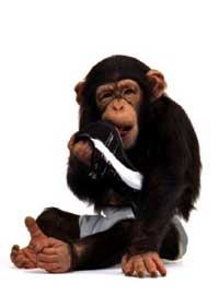 Puma Chimpanzee in TV ad