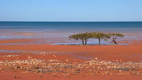 Broome beach in Greenpeace Breathe Ad