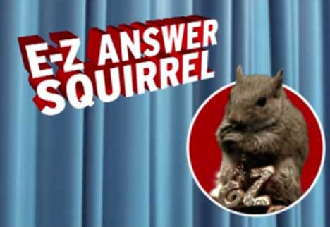 EZ Answer Squirrel