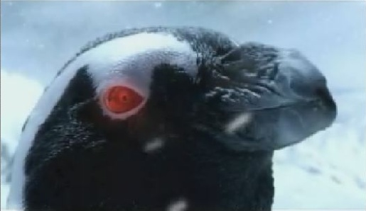 Penguin with red laser eye in Full Frame Festival commercial