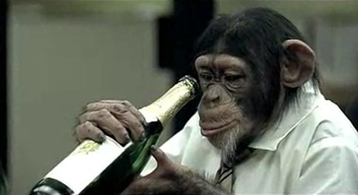 Careerbuilder.com Chimp Drinking