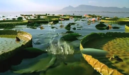 Lilypads in Moto Pebl Colours TV ad