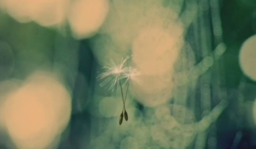 Dandelions in Journey Jewelry TV ad