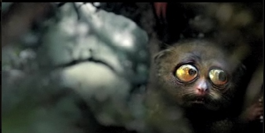 Animal eyes wide open in Mother Energy Drink TV ad
