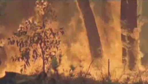 Rainforest Fire from Rainforest Concern Christmas video