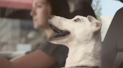 Volkswagen Polo Singing Dog