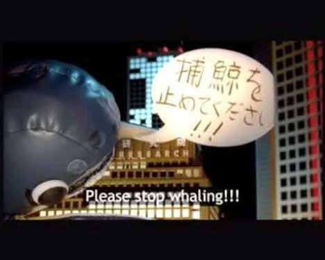 WhaleZilla says please stop whaling