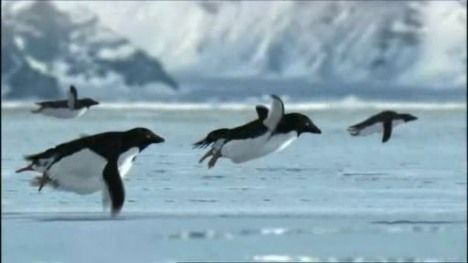 http://theinspirationroom.com/daily/commercials/2008/4/flying-penguins.jpg