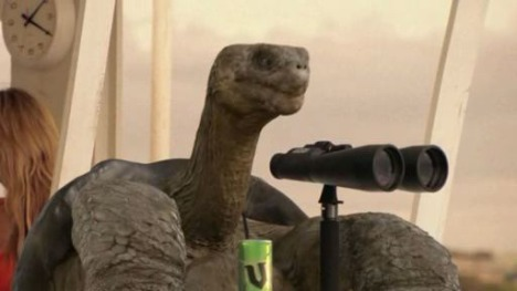 Tortoise with binoculars in V TV ad