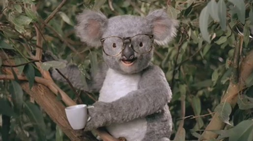 Koala in Careerbuilder.com commercial