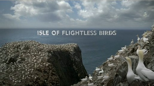 Isle of Flightless Birds