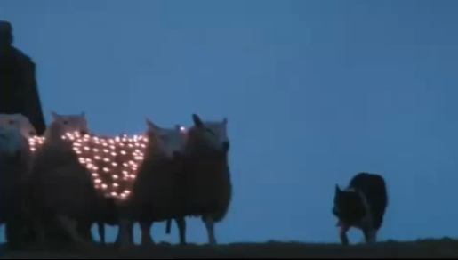 Sheep with LED lights, border collie dog and shepherd