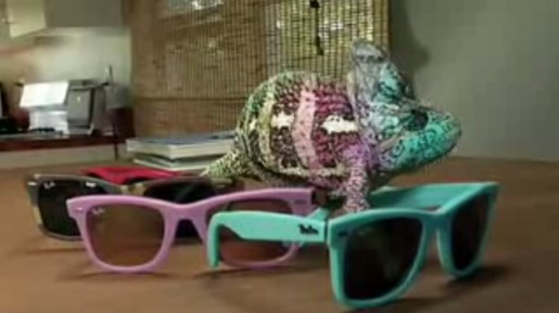 Rayban Sunglasses with Chameleon