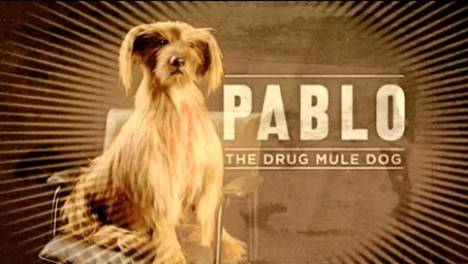 Pablo the Drug Mule Dog