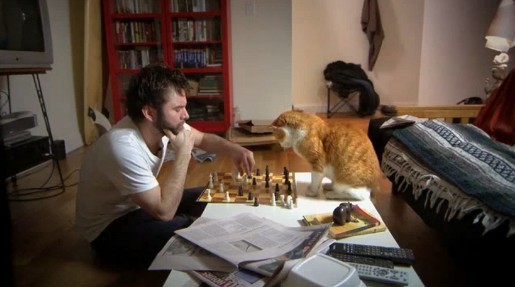 Meetup.com Chess Cat