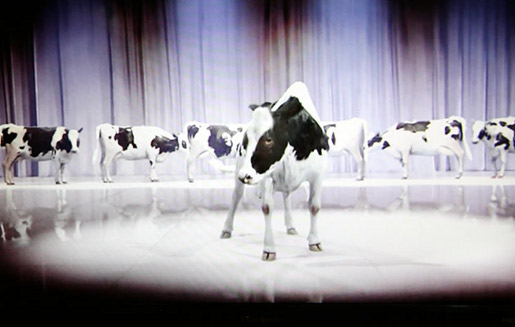 Cadbury Tap Dancing Cows