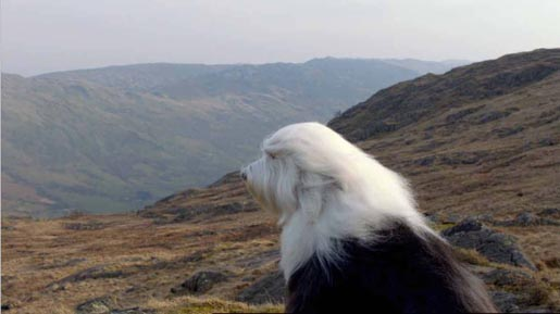 Dulux Dog in the mountains