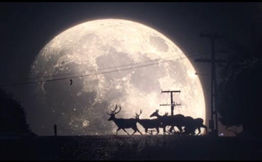 Tooheys Deer Moon