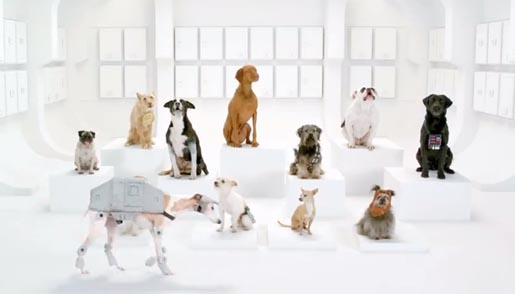 Volkswagen Star Wars Dogs