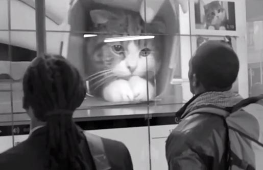 Allan Gray Distractions Cat Video