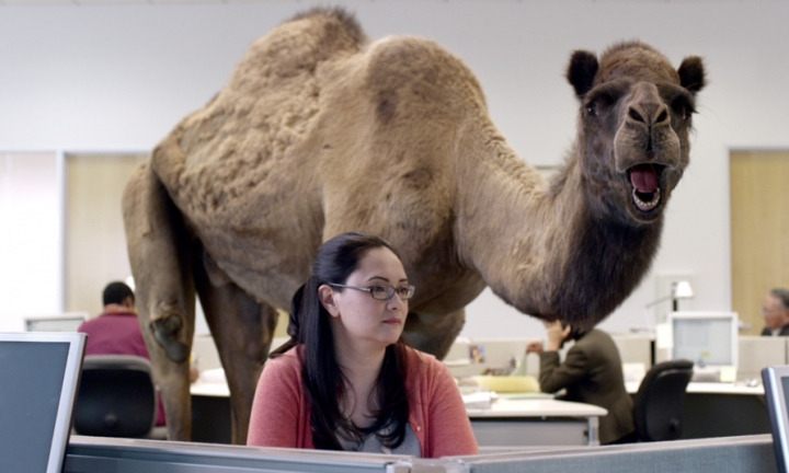Geico Happy Hump Day Images Download the hump day