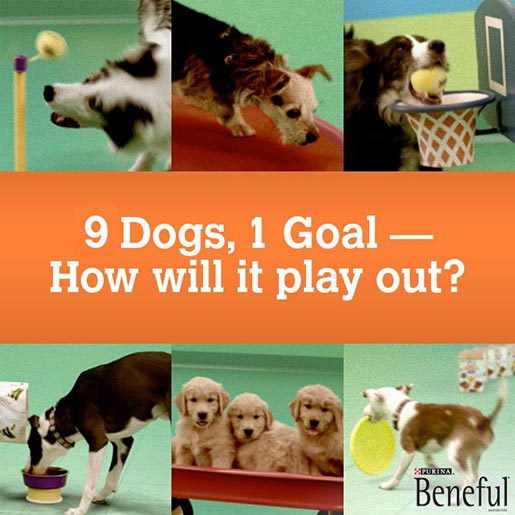 Beneful Goldberg Machine dogs