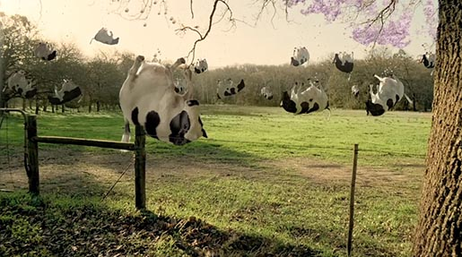 Cadbury Bubbly Cows