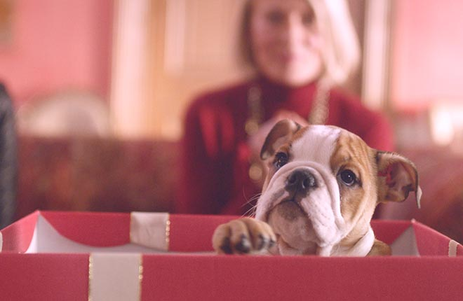 Mulberry #WinChristmas Puppy