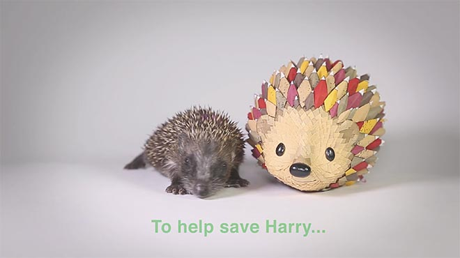 Saving Harry