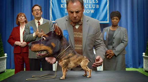 Audi Doberhuahua at Dog Show