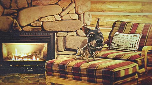 Audi Doberhuahua with Fireplace