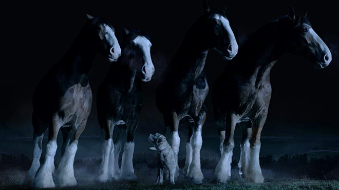 Budweiser Clydesdales and Lost Dog