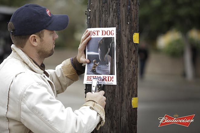 Budweiser Lost Dog notice
