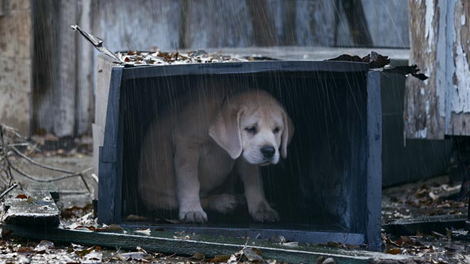 Budweiser Lost Dog shelters from rain