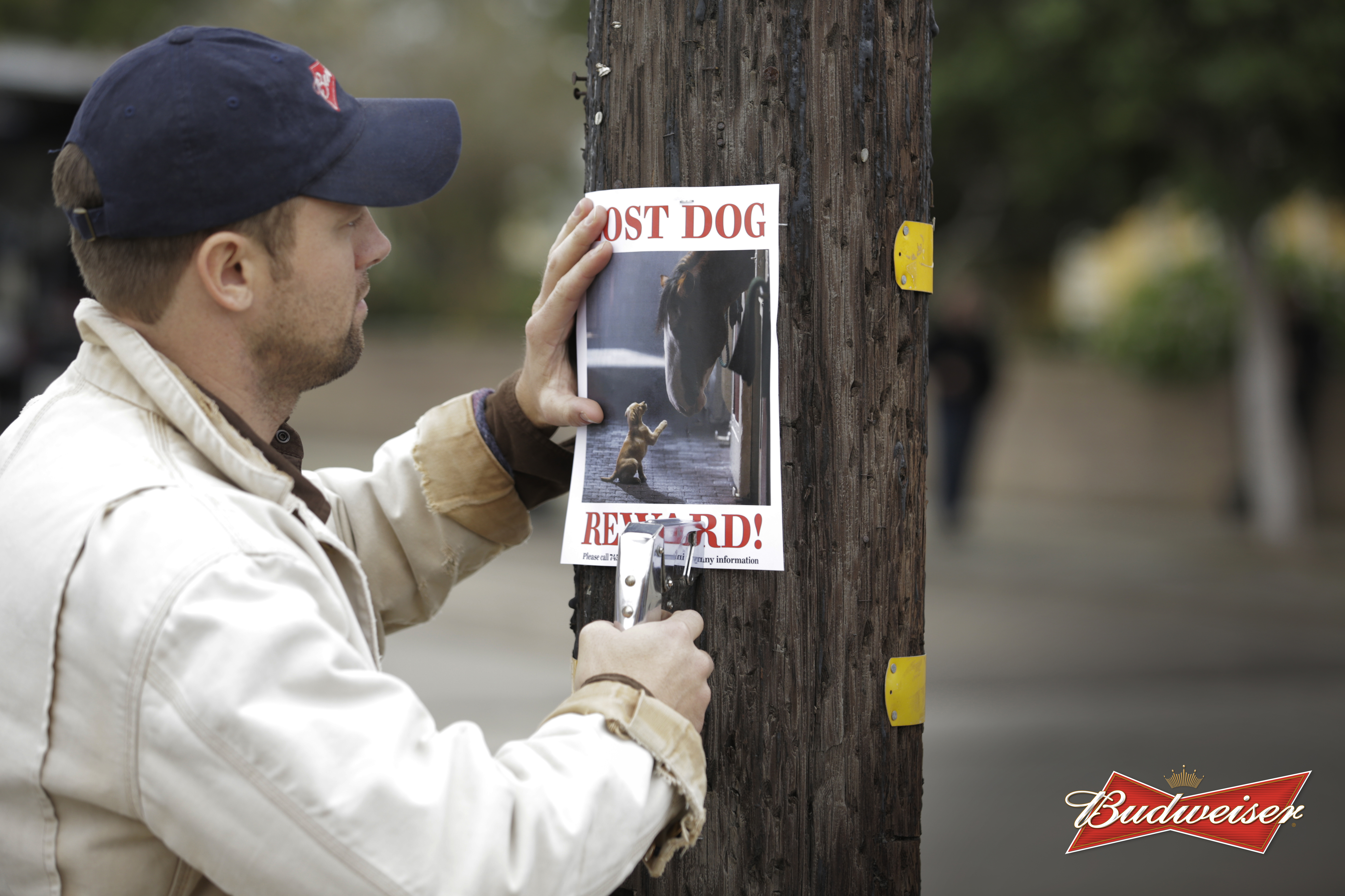 Budweiser Lost Dog Is Found The Inspiration Room