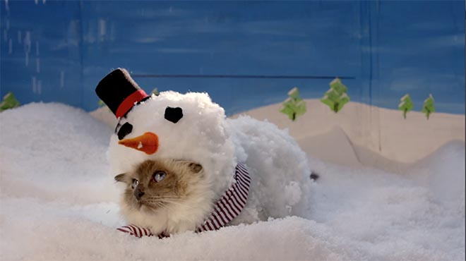 Cat dressed as a snow cat in Temptations commercial