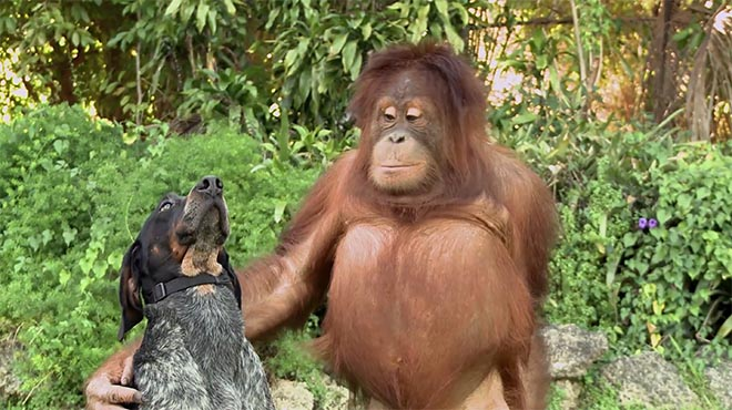 Android Friends Furever Dog and Orangutan