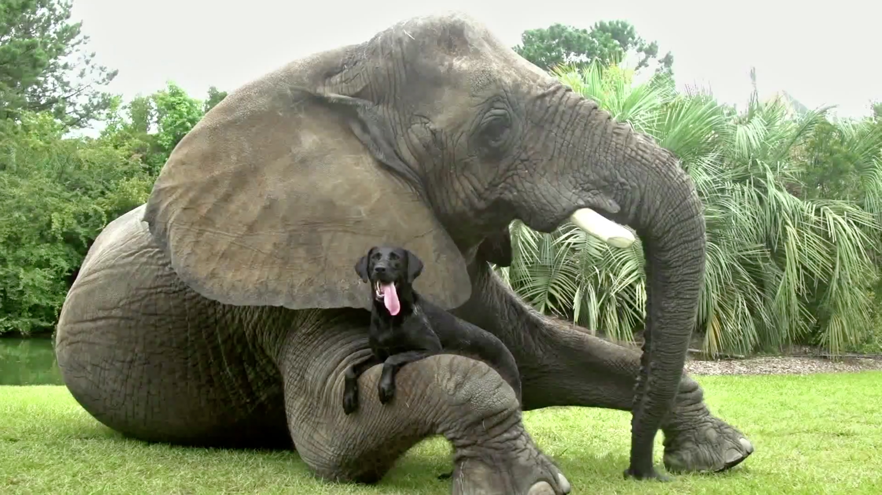 Elephant And Dog Friends In Myrtle Beach