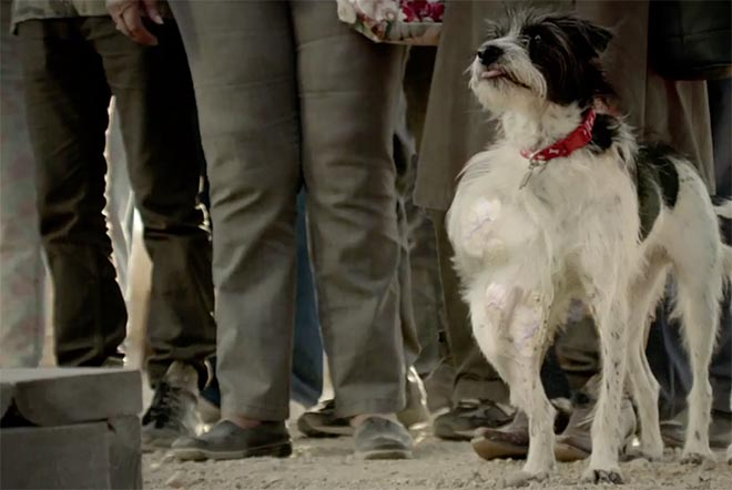 Skittles dog in Settle It Super Bowl ad