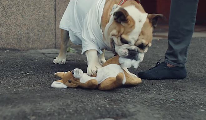 Bulldog mauls kangaroo in Beats by Dre commercial