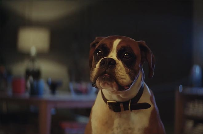 Buster The Boxer in John Lewis Christmas 2016 commercial