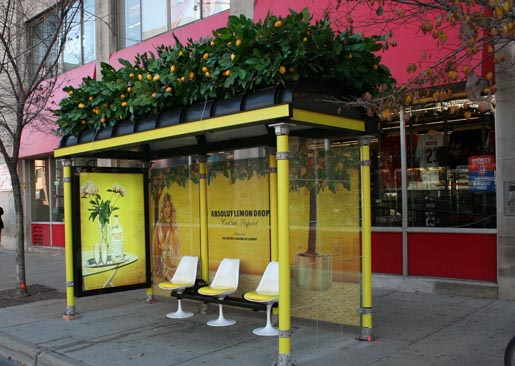 Absolut Lemon Drop Bus Shelter