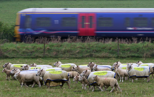 Sheep advertising Trainline.com