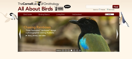All About Birds site