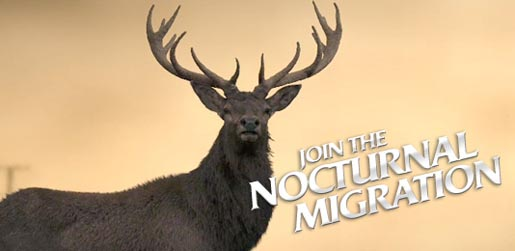 Join the Nocturnal Migration