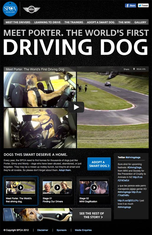 SPCA Meet Porter the World's First Driving Dog site