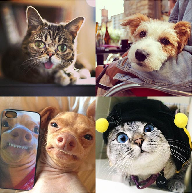Best Friends Instagram Pets