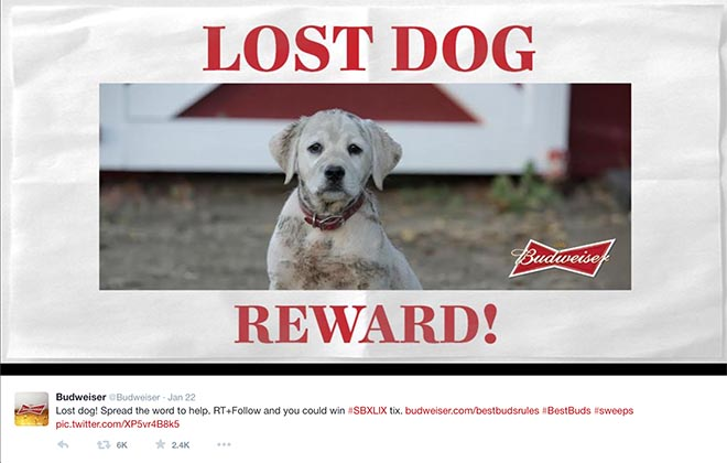 Budweiser Lost Dog Reward